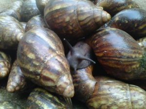 snail farming business plan in nigeria