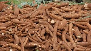 start cassava farming business in nigeria