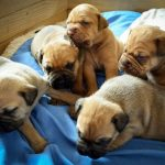 sample dog breeding business plan in nigeria