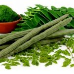 sample moringa farming business plan in nigeria