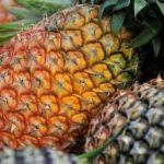 sample pineapple farming business plan in nigeria