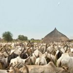 updated cattle farming business plan in nigeria