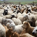 updated sheep farming business plan in nigeria